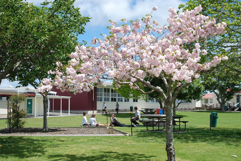 Waiuku College